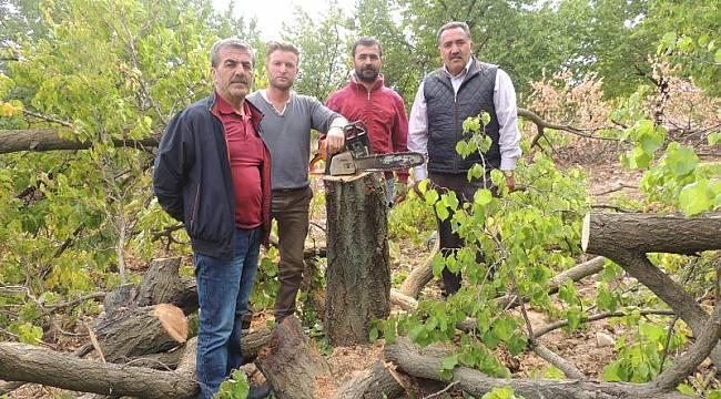 Malatya'da 2.5 Milyon Kayısı Ağacı Kesildi