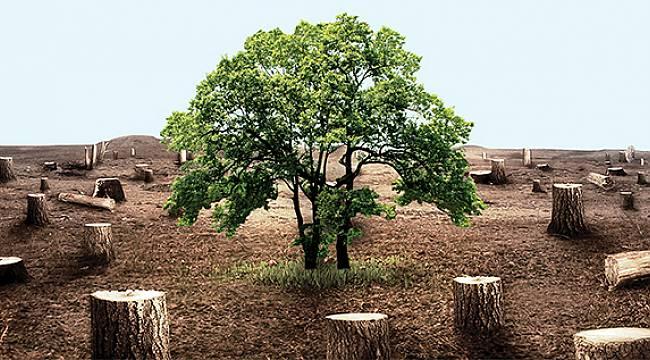Fırat Elektrik Ağaç Kesimi İçin Uyardı
