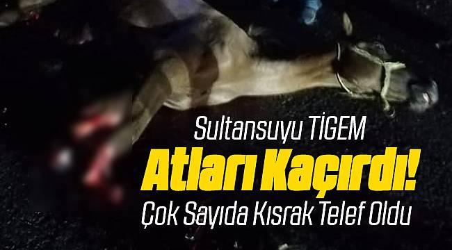 Malatya Sultansuyu Harasında Atlar Kaçtı